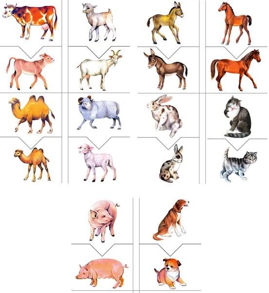 Домашние животные с детенышами картинки для детей карточки, комаром смешные открытки