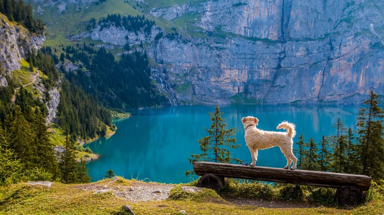 Anjing, hikmah, wujud