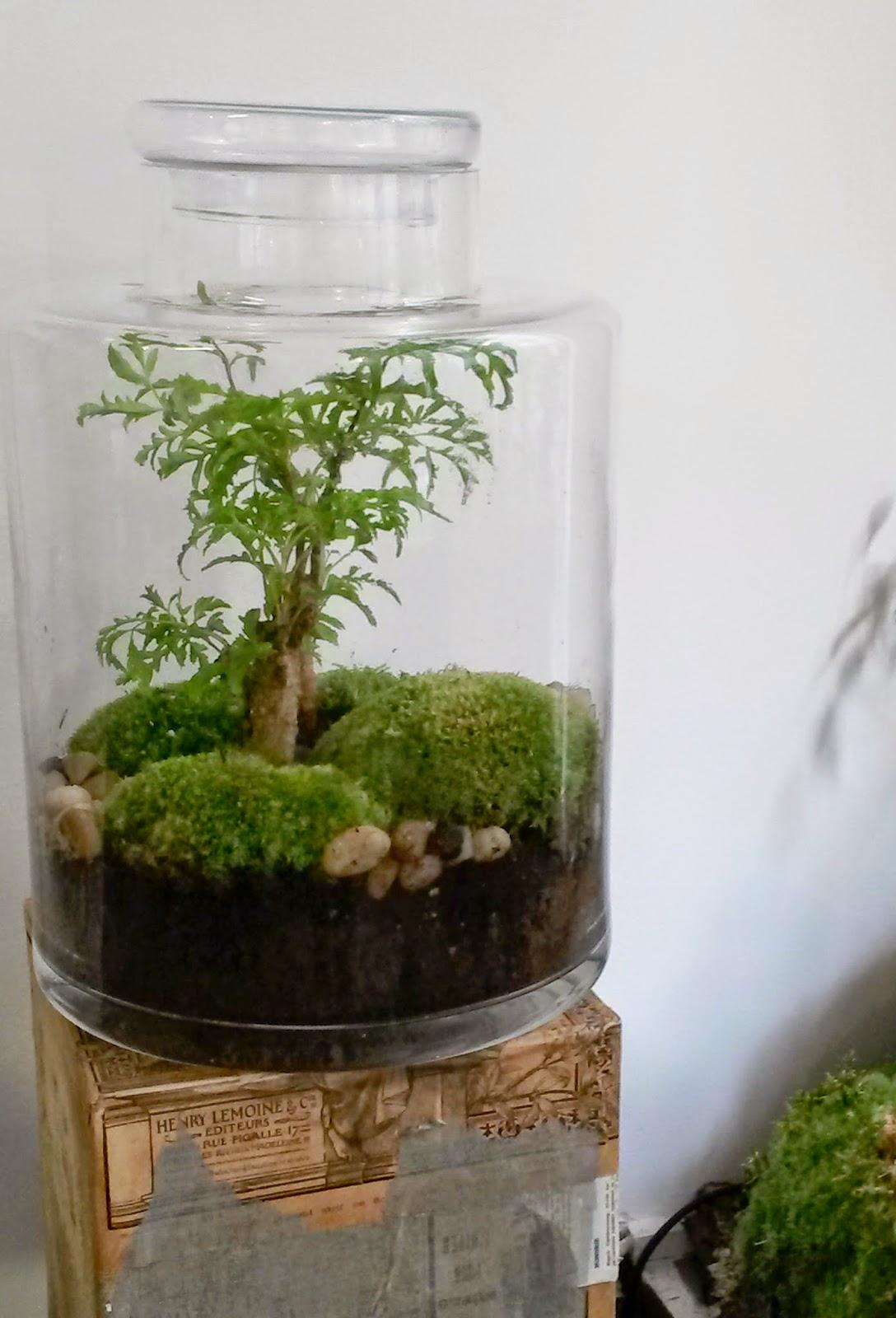 l 39 art de la curiosit classic la plante parfaite. Black Bedroom Furniture Sets. Home Design Ideas