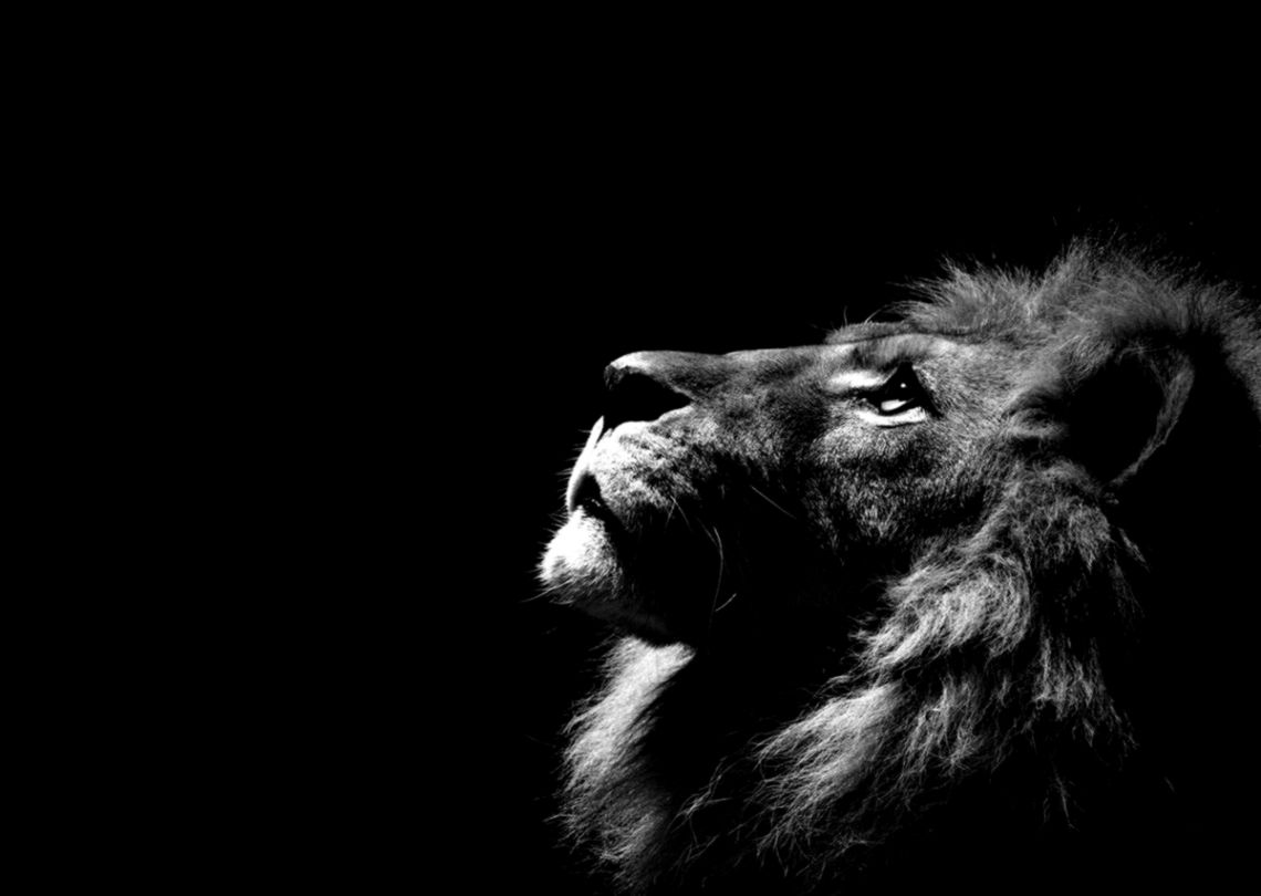 Lion Wallpaper Black And White | Wallpapers Gallery