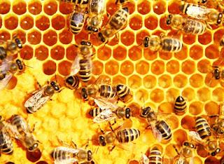 Panduan Budidaya Ternak Lebah Madu