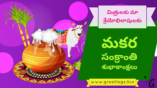Amazing Sankranti Festival Wishes in Telugu with Pongal pots and Ganngireddu