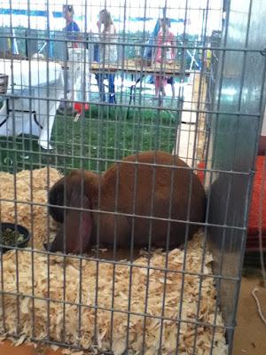 Rabbit at Okehampton Show
