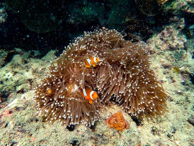 Snorkeling-Koh-Ngai