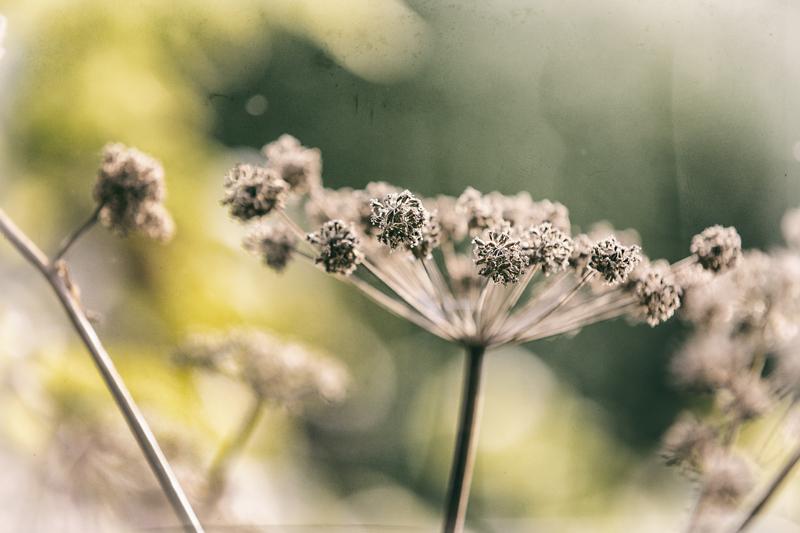 Espoo, luonto, kasvi, kesä, Visualaddict, valokuvaaja, Frida Steiner