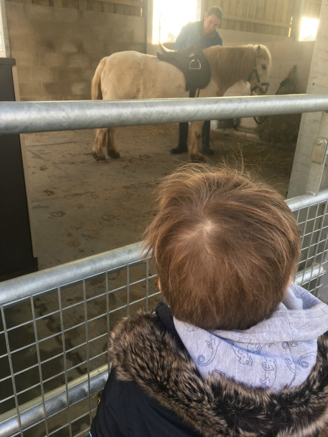 boy-waiting-patiently-for-horse-to-be-saddled-at-Cefn-Mably-Farm-Park