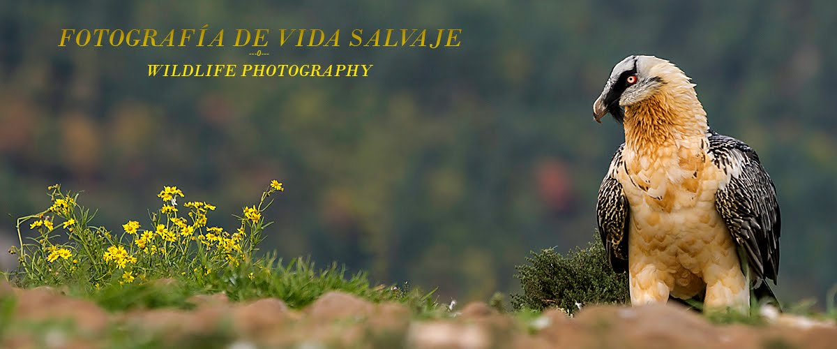 Fotografia de Vida Salvaje - Wildlife Photography