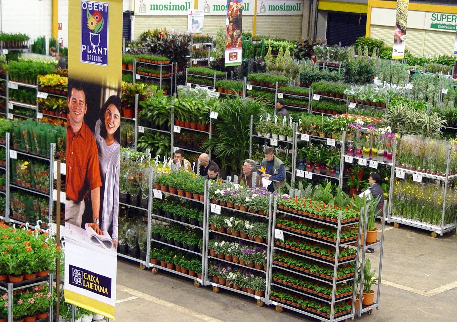 Thm tecnolog as de la horticultura mediterr nea los for Importancia de las plantas ornamentales