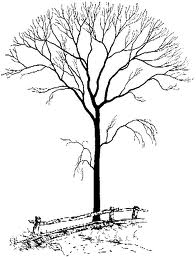 Muddy Puddle Musings: Poems About TREES