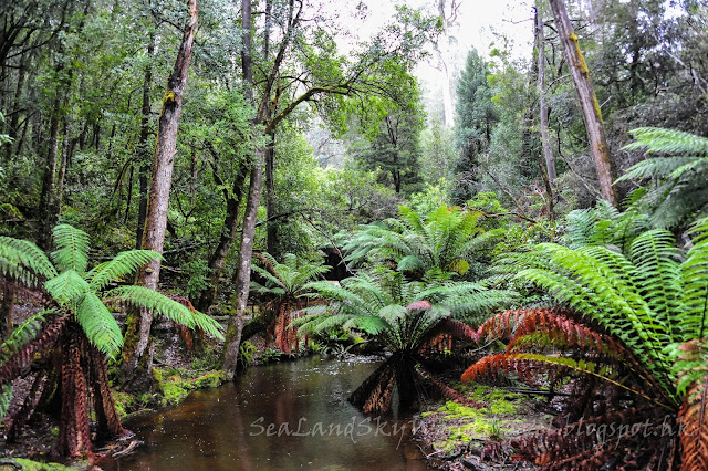 費爾德山國家公園, Mt Field, tasmania, 塔斯曼尼亞,