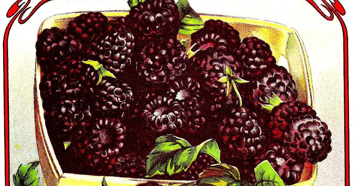 Antique Images Vintage Fruit Clip Art Vintage Graphic Of