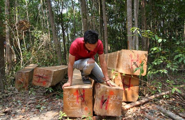 "Gia Lai: Rừng Krông Pa ""chảy máu"""