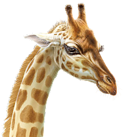 Girafa png