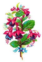 flower floral fushia clipart download plant image digital craft supply