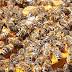 Sargento reformado da PM é atacado por abelhas e morre no interior de Sergipe