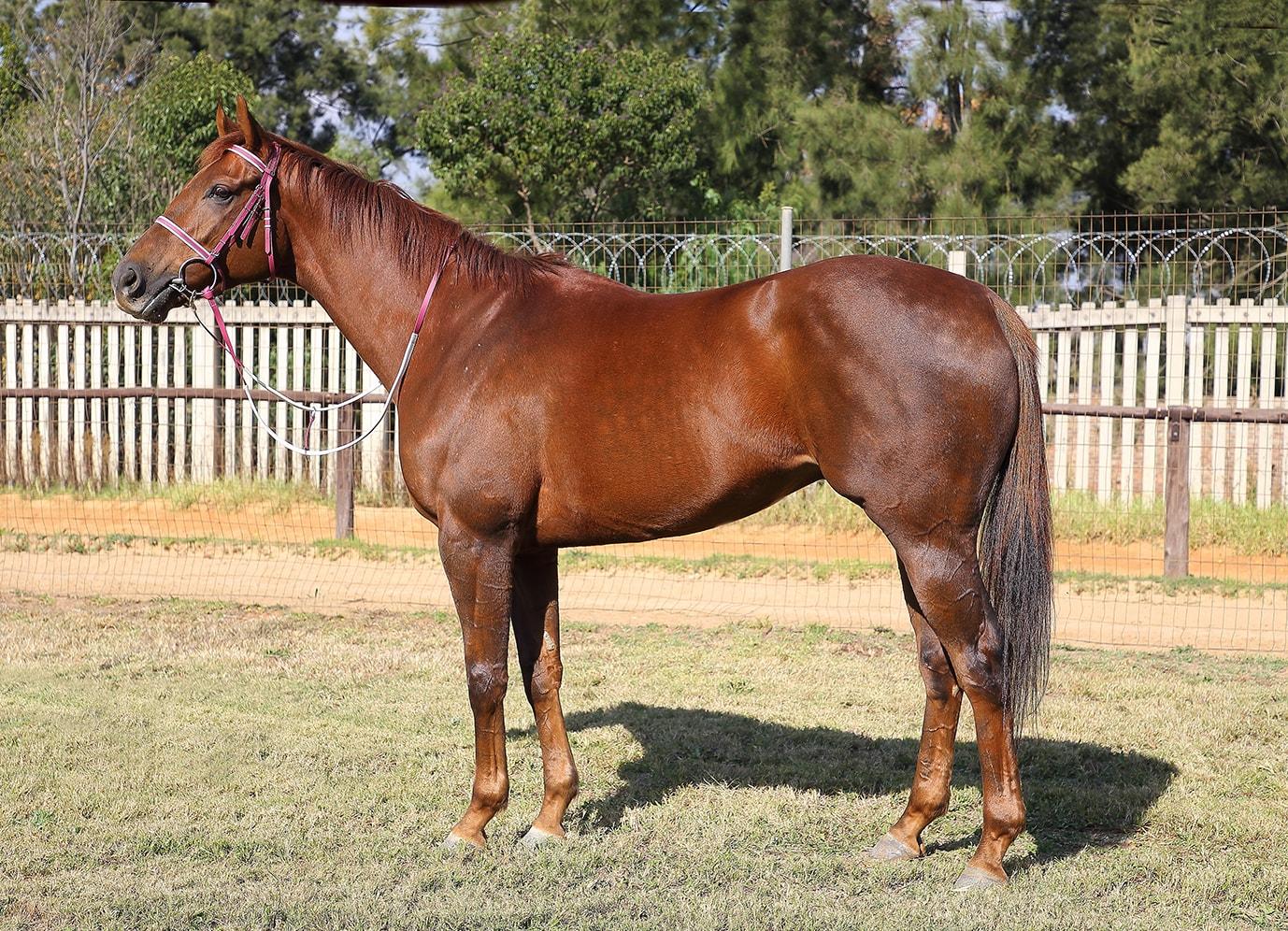 Coral Fever (photo credit: Gold Circle) - Horse Racing - Vodacom Durban July 2018