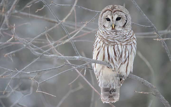 hayvanlara ait kış resimleri