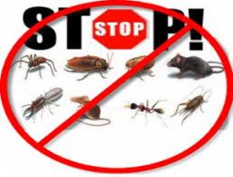 Άρτα: Εργασίες καταπολέμησης κουνουπιών, μυοκτονίες και απολυμάνσεις στο Δήμο Αρταίων