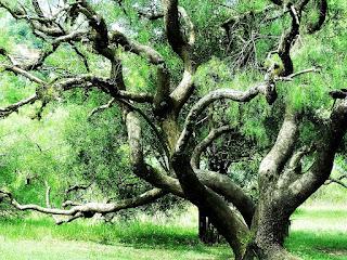 Árvore do Jardim Botânico de Porto Alegre