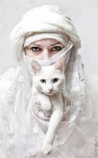 magia no dia a dia gato branco