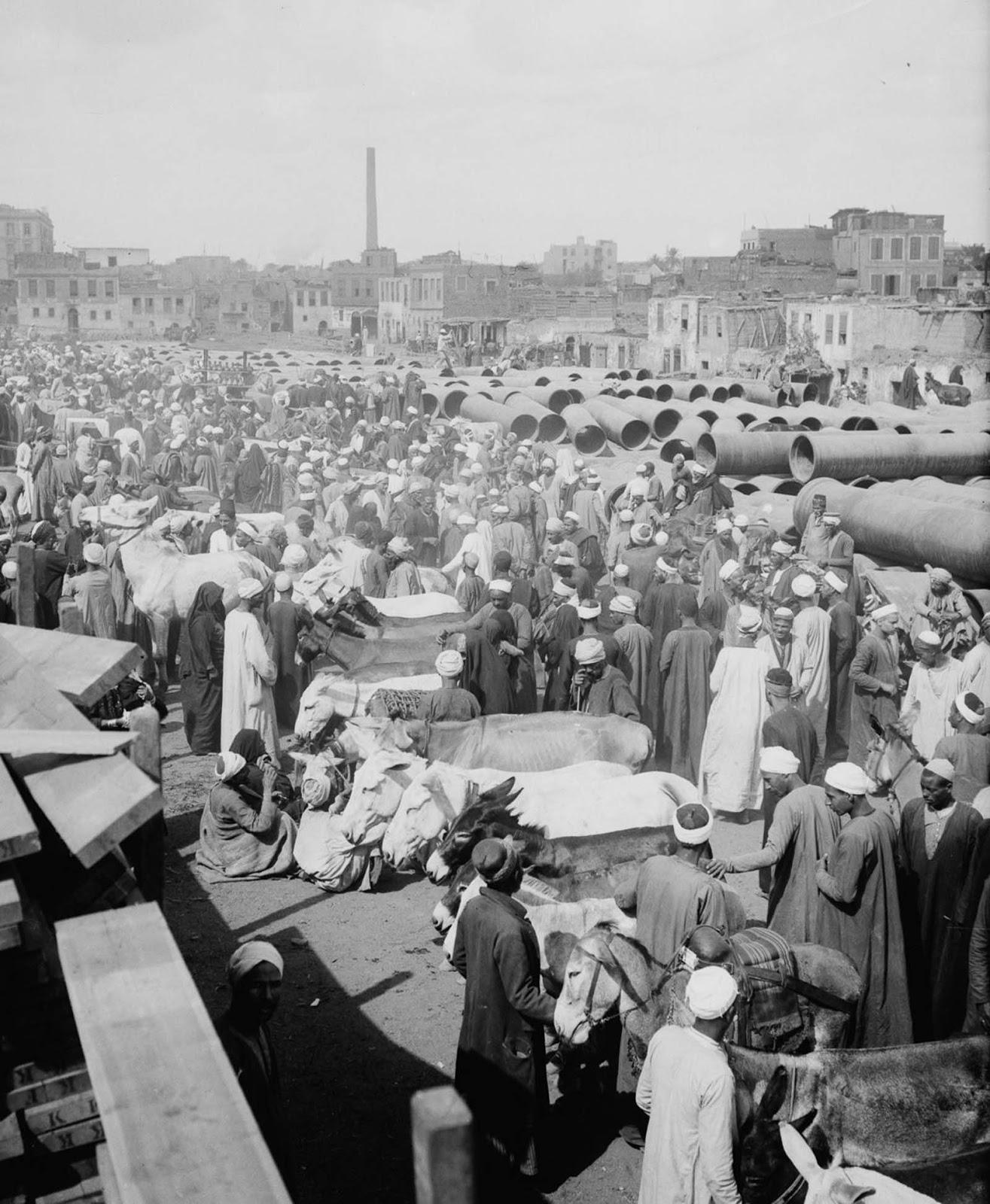 The Cairo donkey market. 1900.