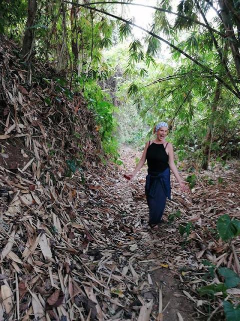 aide leit-lepmets indoneesia inspiratsioon riisipõld riisipõllud džungel