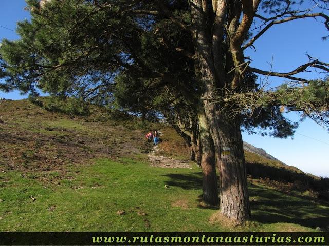 Ruta Pienzu por Mirador Fito y Biescona: Pinos y una pequeña subida