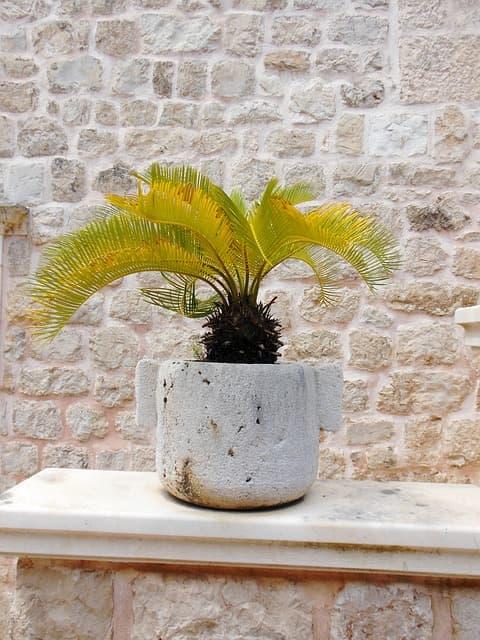 como ter lindas palmeiras em casa