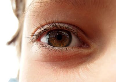Best Foods for Eye Health