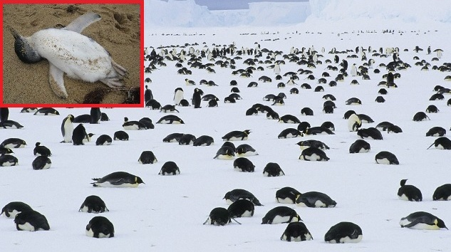 MORE THAN 1000 PENGUINS FOUND DEAD IN ANTARCTICA