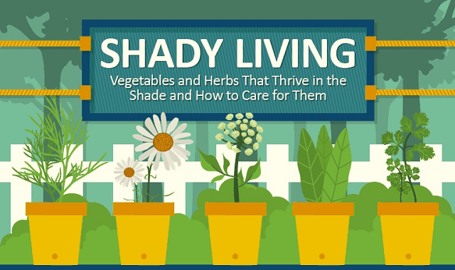 Vegetables and Herbs That Thrive in the Shade and How to Care for Them