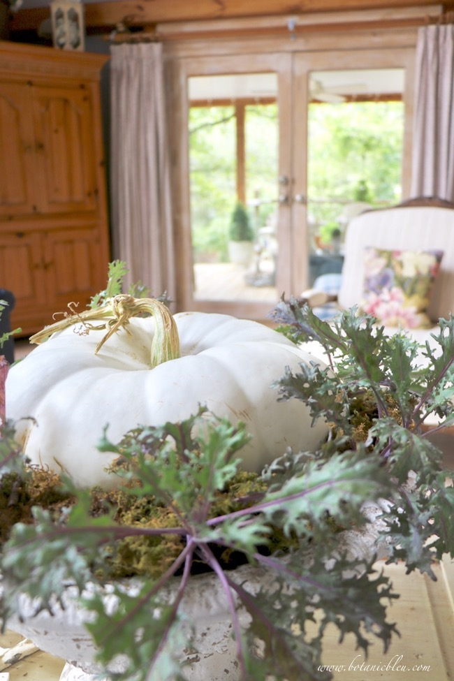 french inspired fall living room white heirloom pumpkin in a bed of ruffled ornamental kale