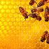 Η υγεία μας συνδέεται με την υγεία των μελισσών!