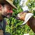 Australia / Tasmania - Día 2 (23/12/15) - Conociendo la granja Plumplot