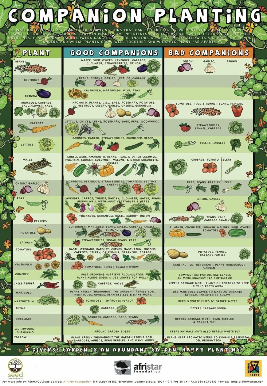 Chart Companion Planting