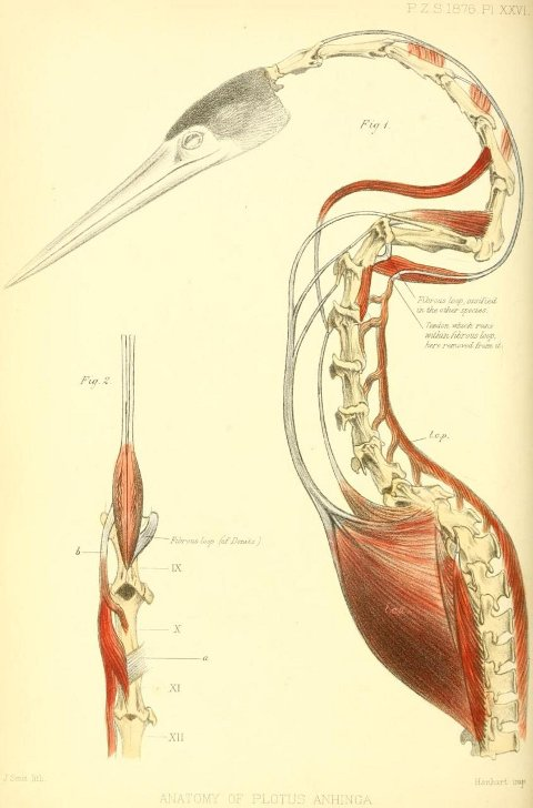 Anatomy Of A Great Picture: Art Of Emily Willoughby: The Neck Is A Lie