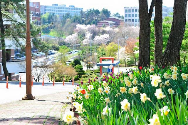 Tuyển Sinh Chương trình 1 năm học tiếng Hàn đại học Chosun