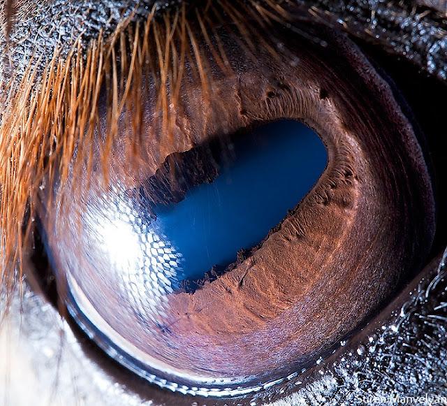Amazing close-up photos of animal eyes (9 pics) | Amazing ...