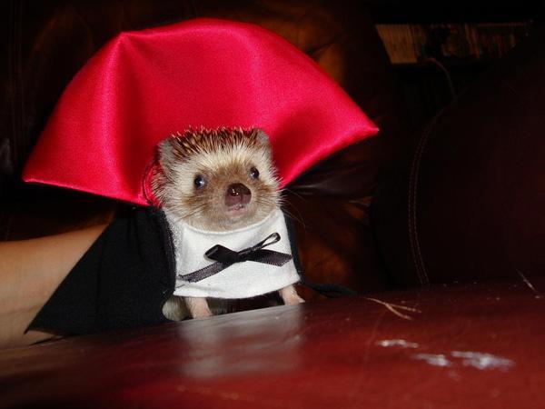 Thú cưng vừa đáng sợ vừa... đáng yêu trong trang phục Halloween
