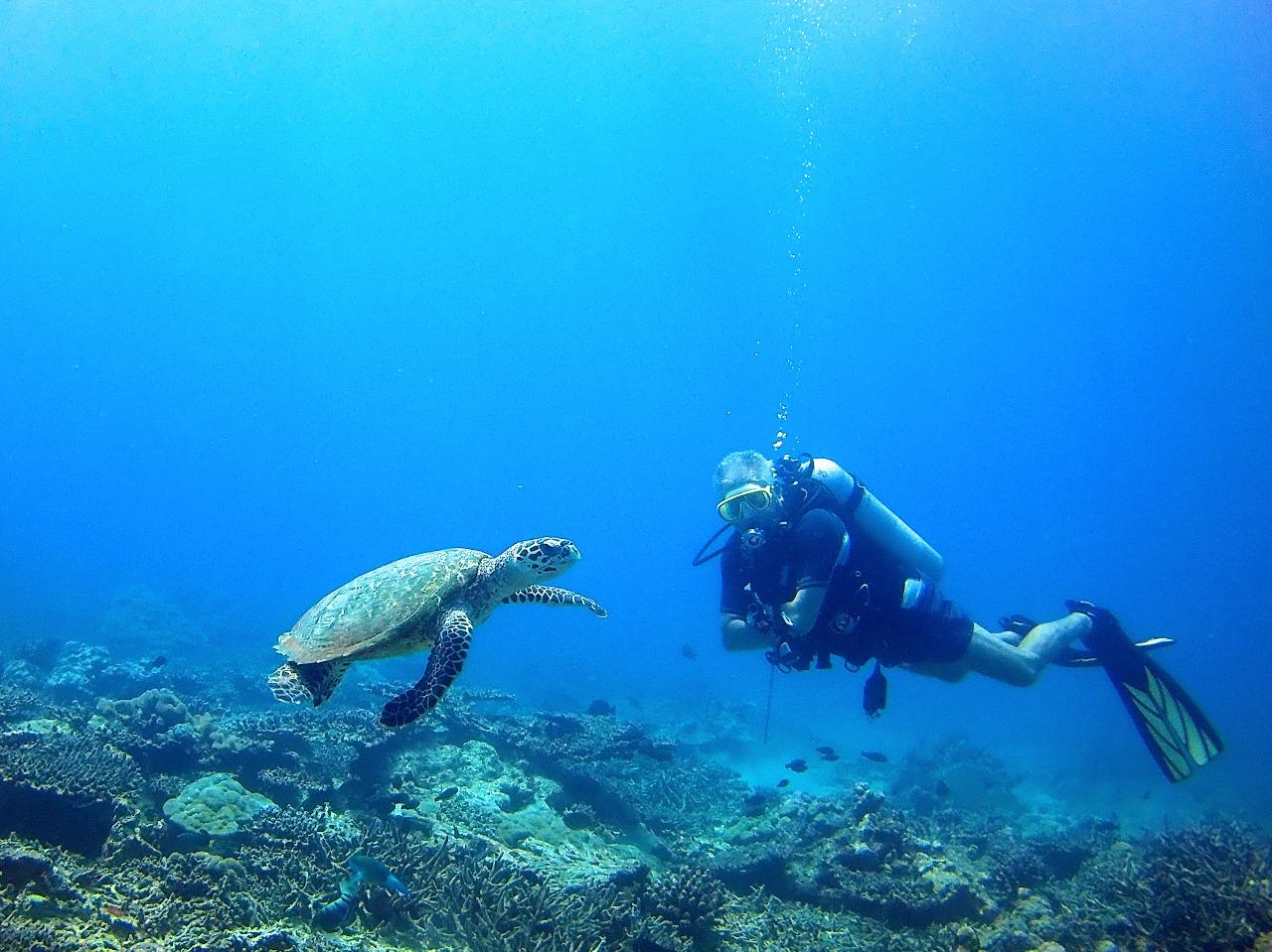 Underwater Centre Dive Seychelles Daniel Hugelmann Takes A