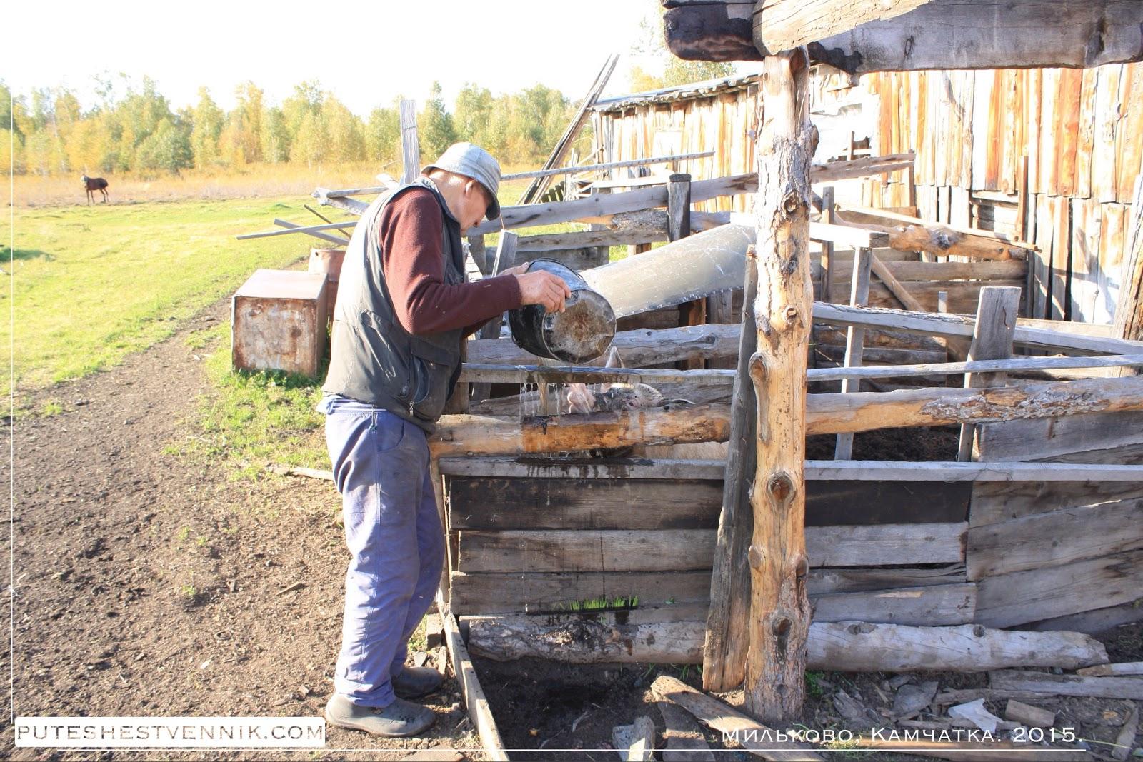 Фермер у свинарника