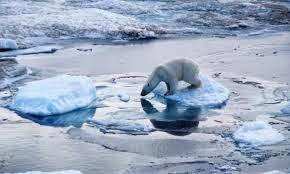 photo of polar bear stranded on tiny piece of floating ice