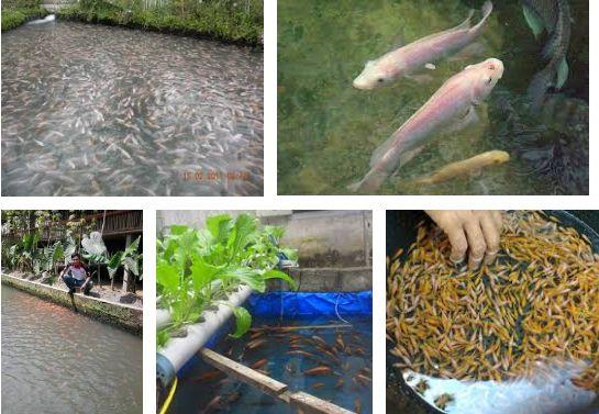 Syarat Lahan Usaha Budidaya Ikan Nila