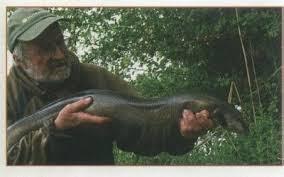 سمك الحنشان