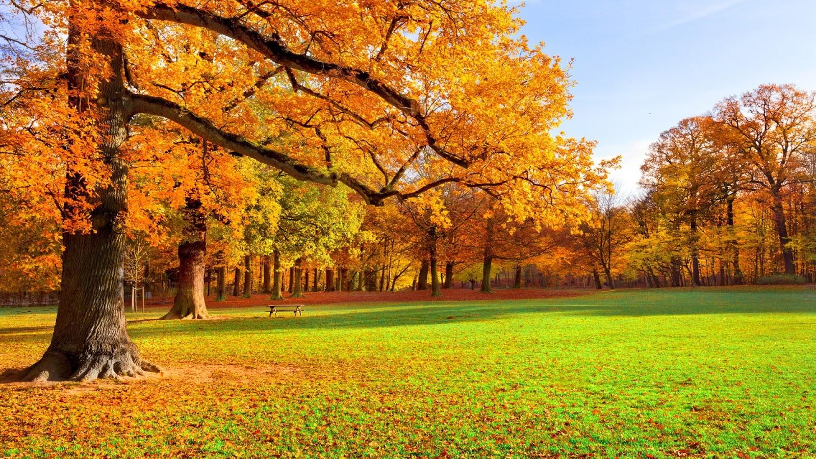 hình nền đẹp mùa thu lá vàng lãng mạng