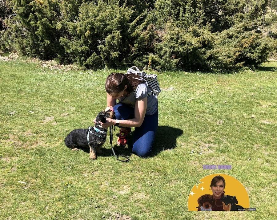 Ruta por rascafría con perro