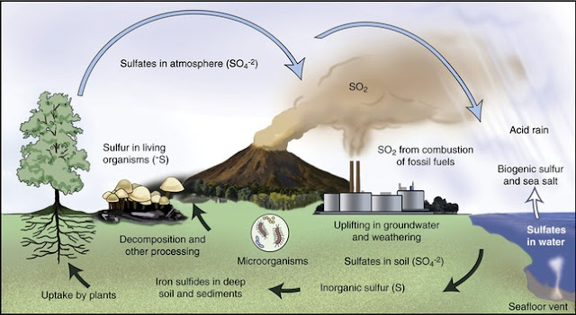 Sulphur Cycle or Sulphur Transformations