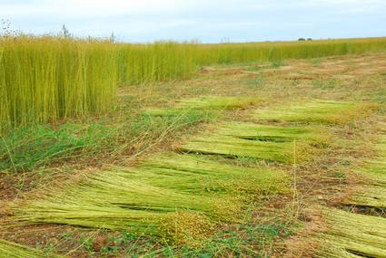 Flax Fiber Production