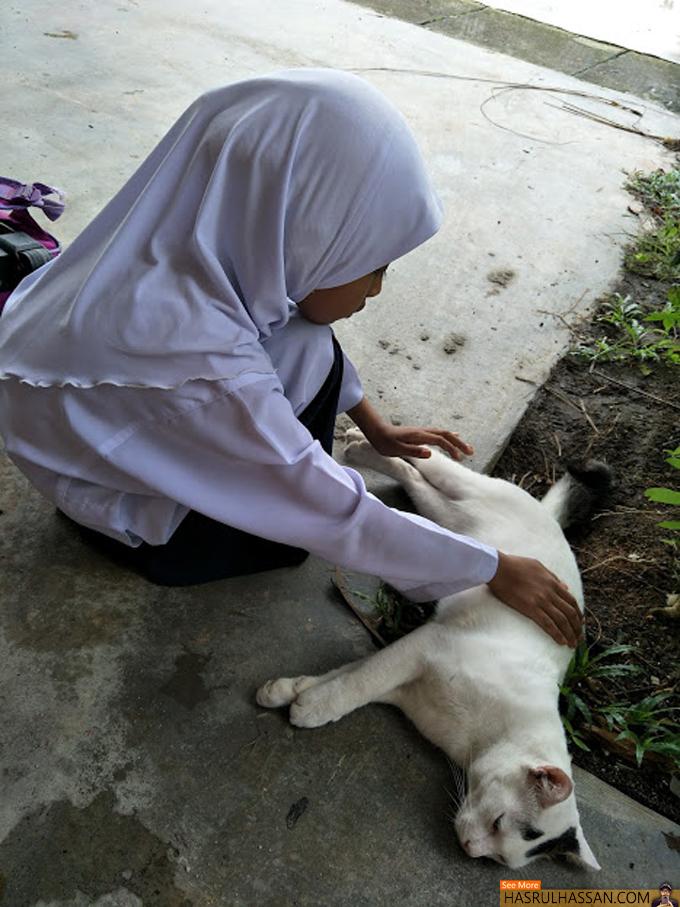 Pelihara Kucing Satu Sunah dan Jemput Rezeki