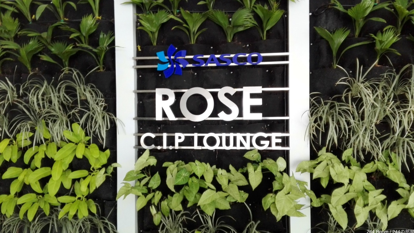 sasco-cip-rose-lounge